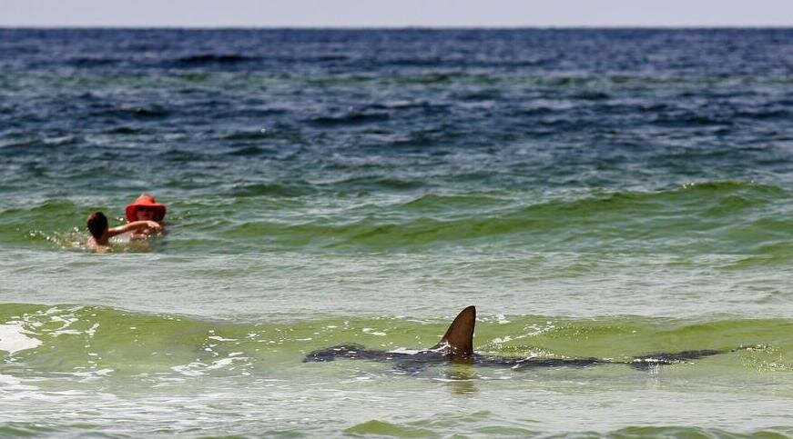 PHOTO Shark Cruises Florida Beach