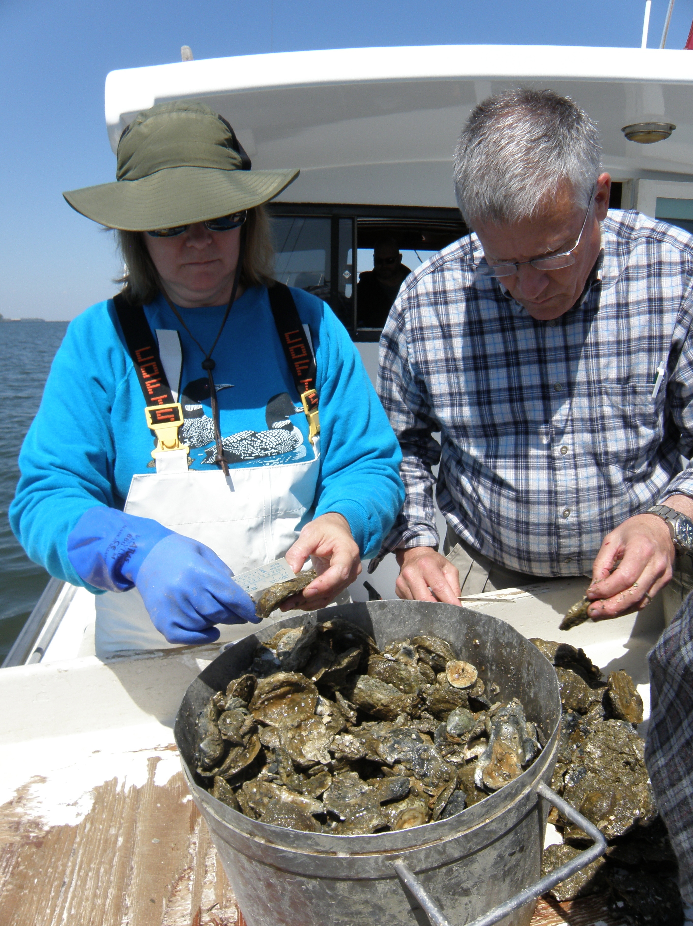 Ellen Cosby and Jim Wesson measure last year's oyster plantings.