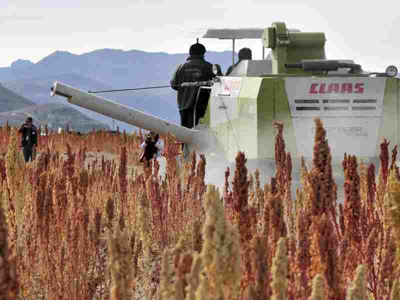 A combine harverster at work in a quinoa field in Pukara, southern Bolivia, in March. Bolivia produces 70 percent of the world's quinoa.