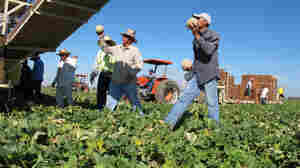 How To Better Protect Farmworkers From Pesticides: Spanish