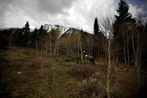 A view of pines and aspens with the Centennial Range in the background. The Forest Service says it needs to thin or perform prescribed burns in more than 200 million acres of land.
