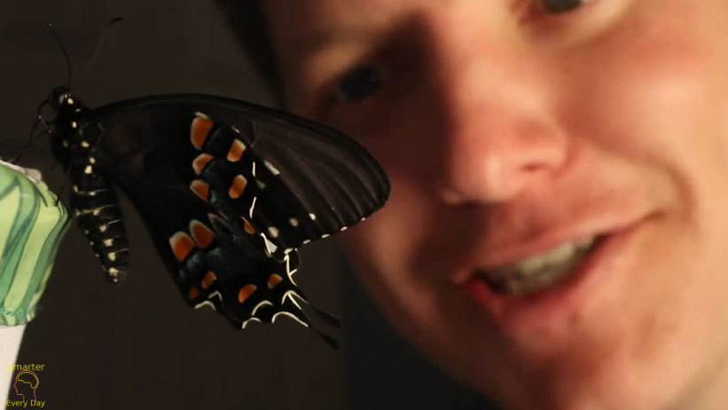 Getting Cozy With Baby Butterflies ... So Cozy, They Whisper A Wriggly Secret