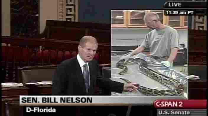 Sen. Bill Nelson (D-Fla.) with a floor chart featuring a photo of a snake.