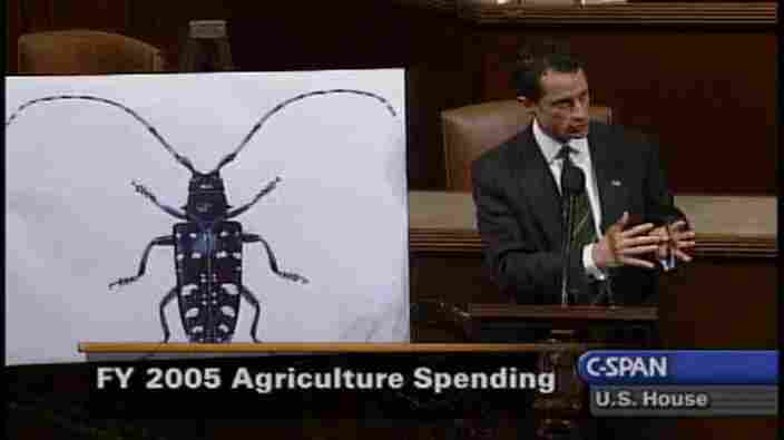 Rep. Anthony Weiner (D-N.Y.) and a floor chart of a bug.