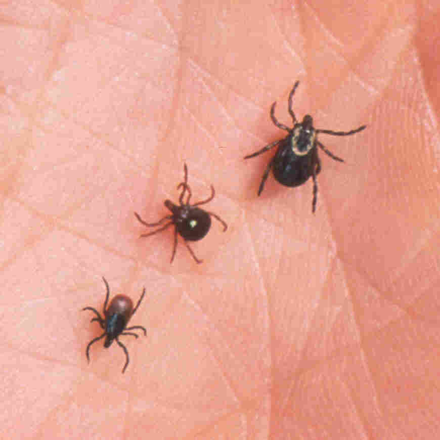 Unusual Tick-Borne Virus Lurks In Missouri's Woods