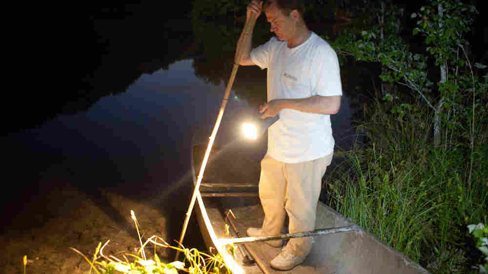 The Old Gig: Catching Frogs On Warm Summer Nights