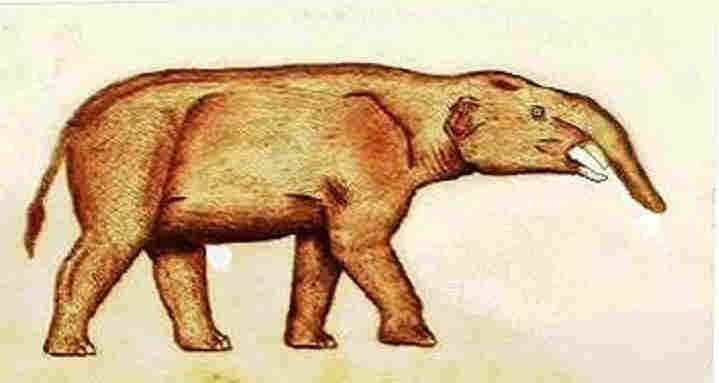 Aouth American elephant