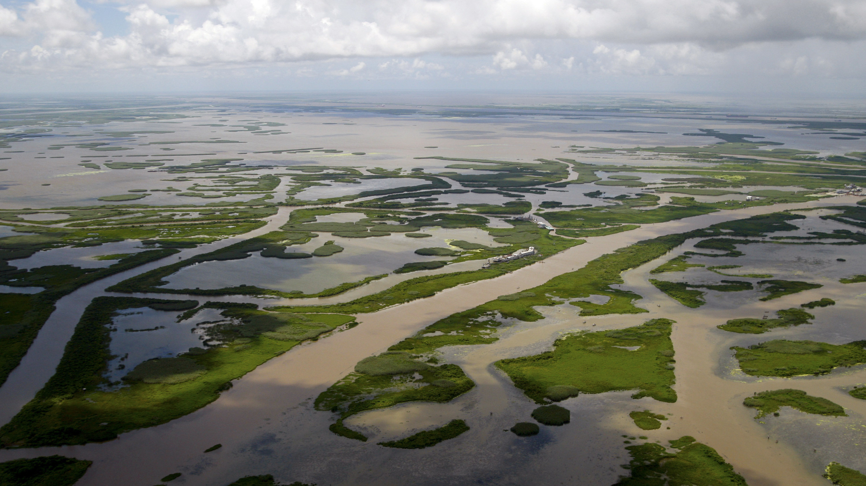 Lousiana Wetlands