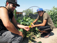 Efren Martinez (right), 22, and his friend Marcos Perez try to get neighborhood kids interested in gardening at Las Milpitas de Cottonwood farm, which is run by the local food bank in Tucson, Ariz.