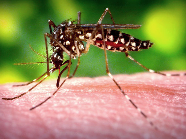 Why Mosquitoes Love Me, And Other Mysteries Revealed