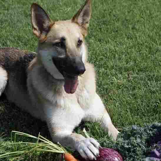 Farm To Fido: Dog Food Goes Local