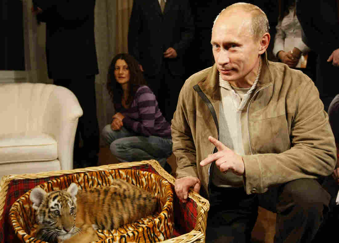 Putin with the tiger cub he received as a birthday gift on Oct. 9, 2008.