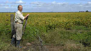 An Argentine farmer stands by his field of trangenic soy, designed for resistance to drought and salinity.