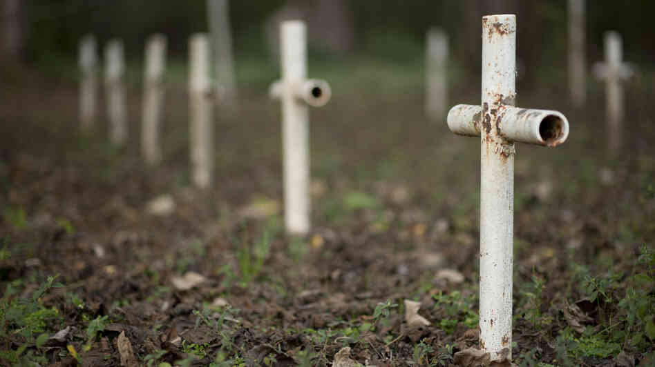 Metal crosses mark graves at the cemetery of the former Arthur Dozier School for Boys in Marianna, Fla. Investigators in Florida using ground-penetrating radar and soil samples say there are nearly 100 unmar
