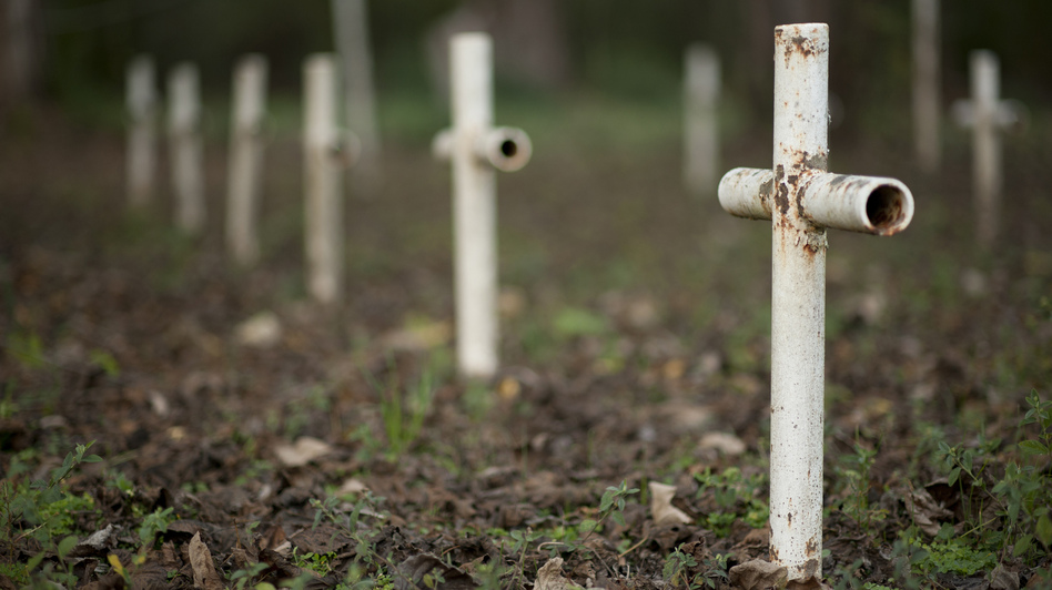 Metal crosses mark graves at the cemetery of the former Arthur Dozier School for Boys in Marianna, Fla. Investigators in Florida using ground-penetrating radar and soil samples say there are nearly 100 unmarked graves on the grounds. (Reuters/Landov)