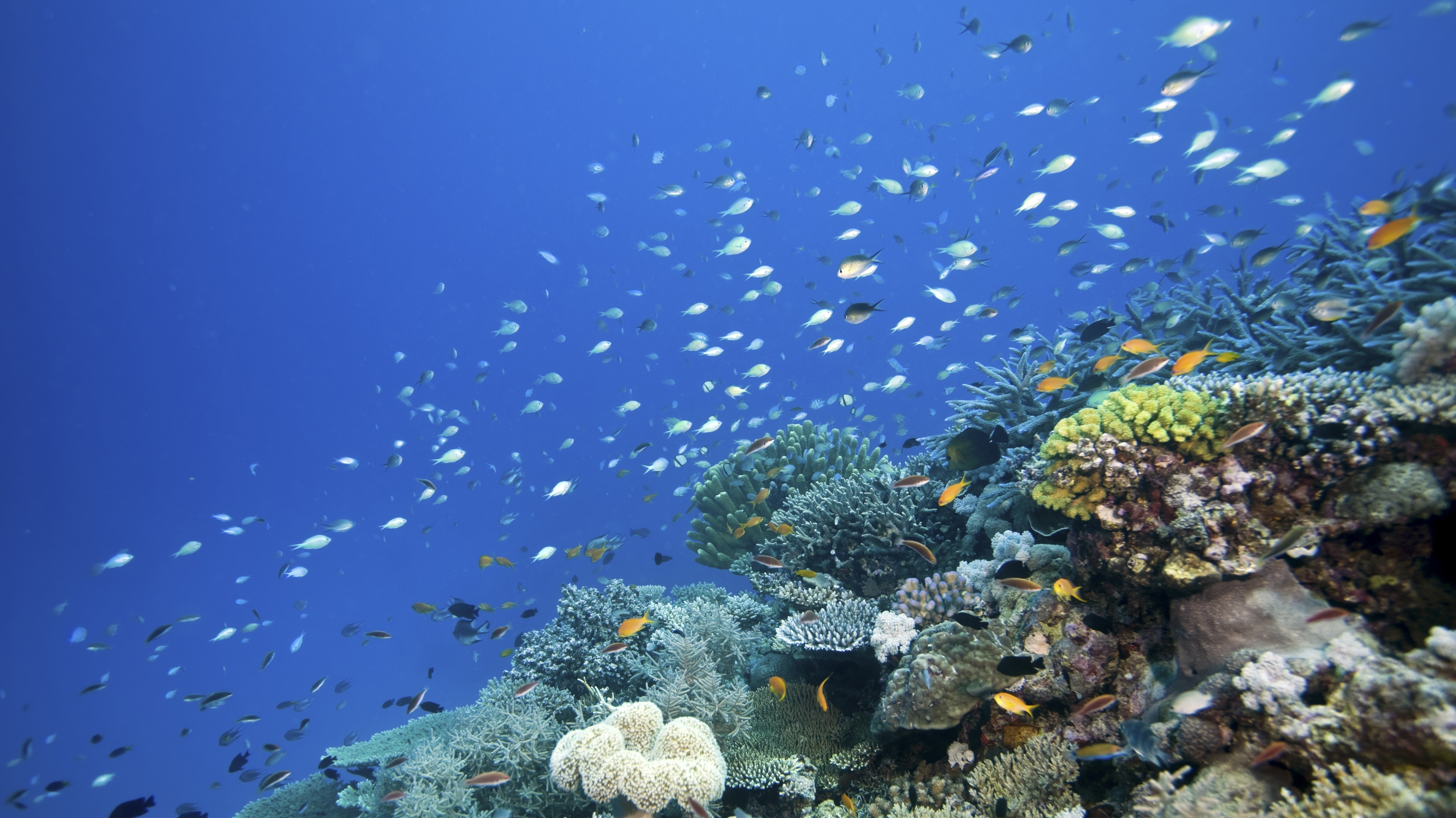 Our Once And Future Oceans: Taking Lessons From Earth's Past