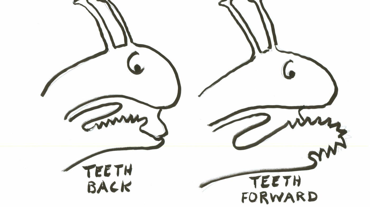 Why Dentists Should Fear Snails : Krulwich Wonders... : NPR