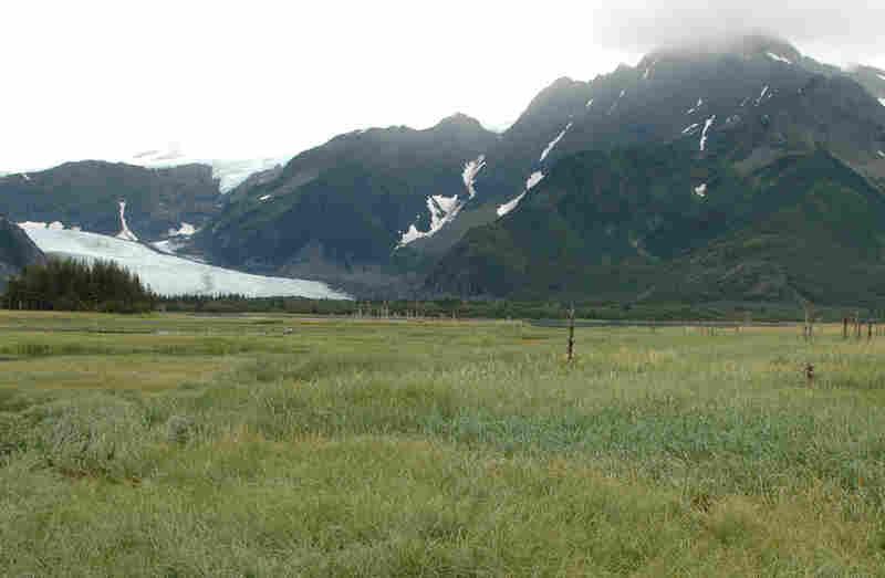 Pedersen Glacier, 2005