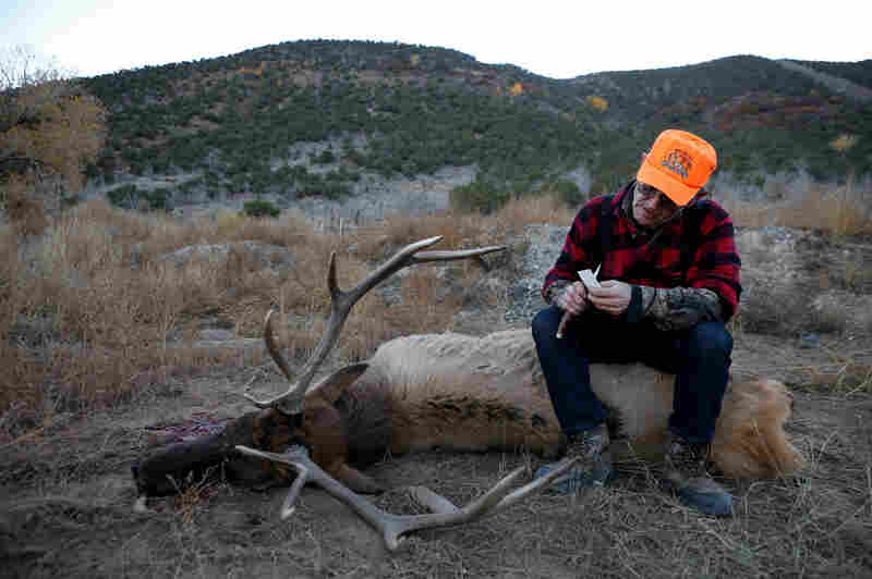 Thomas Ball prepares to tag the elk he shot in Parachute, Colo., on his friend Roy Savage's land. He supports natural gas drilling in the area, pointing out that the elk he got was in a herd grazing on land right by the gas wells.