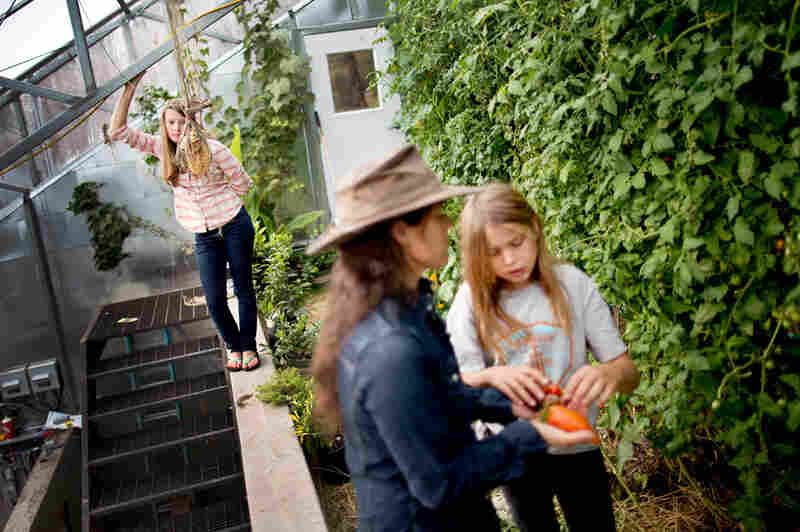 Lily Janssen (back left), watches as her mother and sister, Ginger and Laela Janssen, pick tomatoes from their greenhouse. Their home overlooks the Elk Mountain Range in Colorado. Ginger and her husband, Robb, built their home in a very site-specific location that lends itself to renewable and minimal energy use.