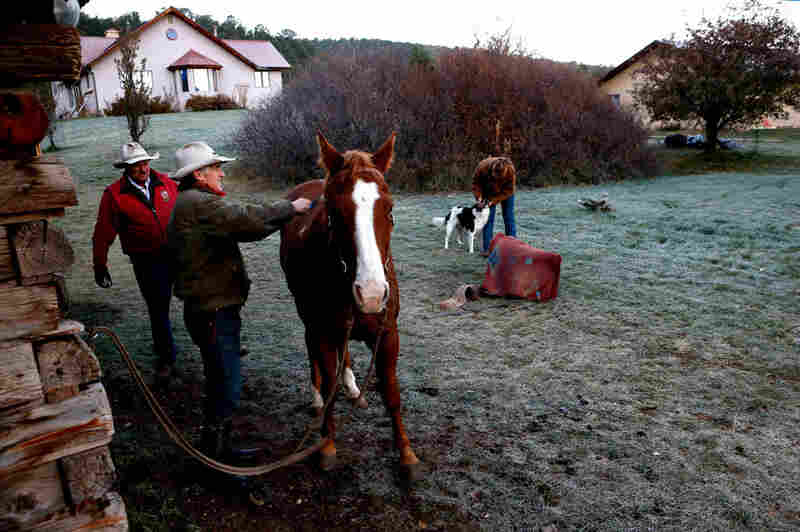 Bill Fales with Cold Mountain Ranch prepares his horses for a cattle drive with his friend Frank Houpt (back left) and daughter Molly Fales (righ). He loves ranching and is doing everything he can to protect Thompson Divide from gas drilling.