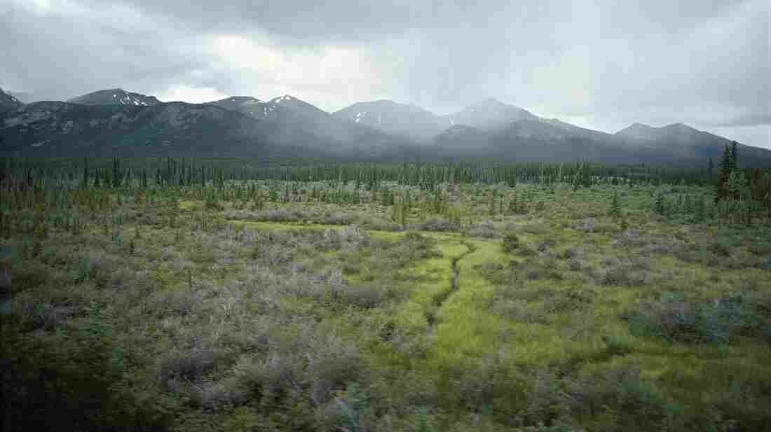 Plants accumulate carbon in the spring and summer, and they release it back into the atmosphere in the fall in winter. And a change in the landscape of the Arctic tundra, seen here, means that shrubs hold onto snow better, which keeps the organic-rich soils warmer and more likely to release carbon dioxide that's stored there.