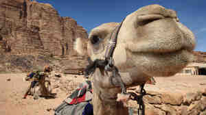A dromedary camel waits for a tourist to hop on its back in Petra, Jordan. The country has recorded two cases of the Middle East respirator