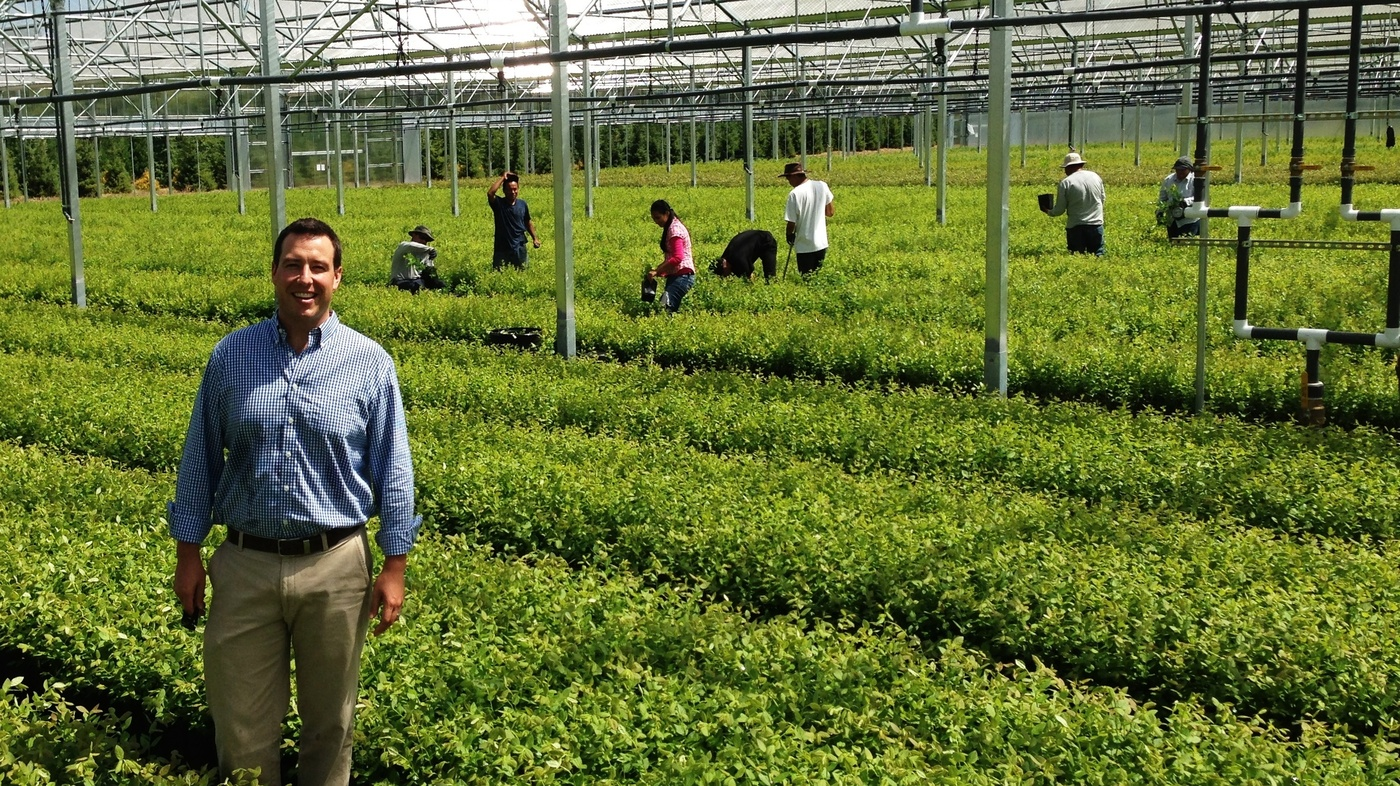 Why This Year S Blueberry Bounty Has Growers Feeling Blue The Salt Npr