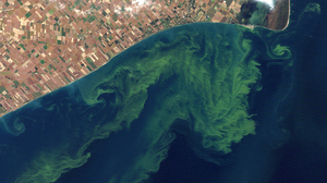 A 2011 satellite photo shows algae blooms swirling on Lake Erie. Experts are expecting another large bloom this year on the lake.