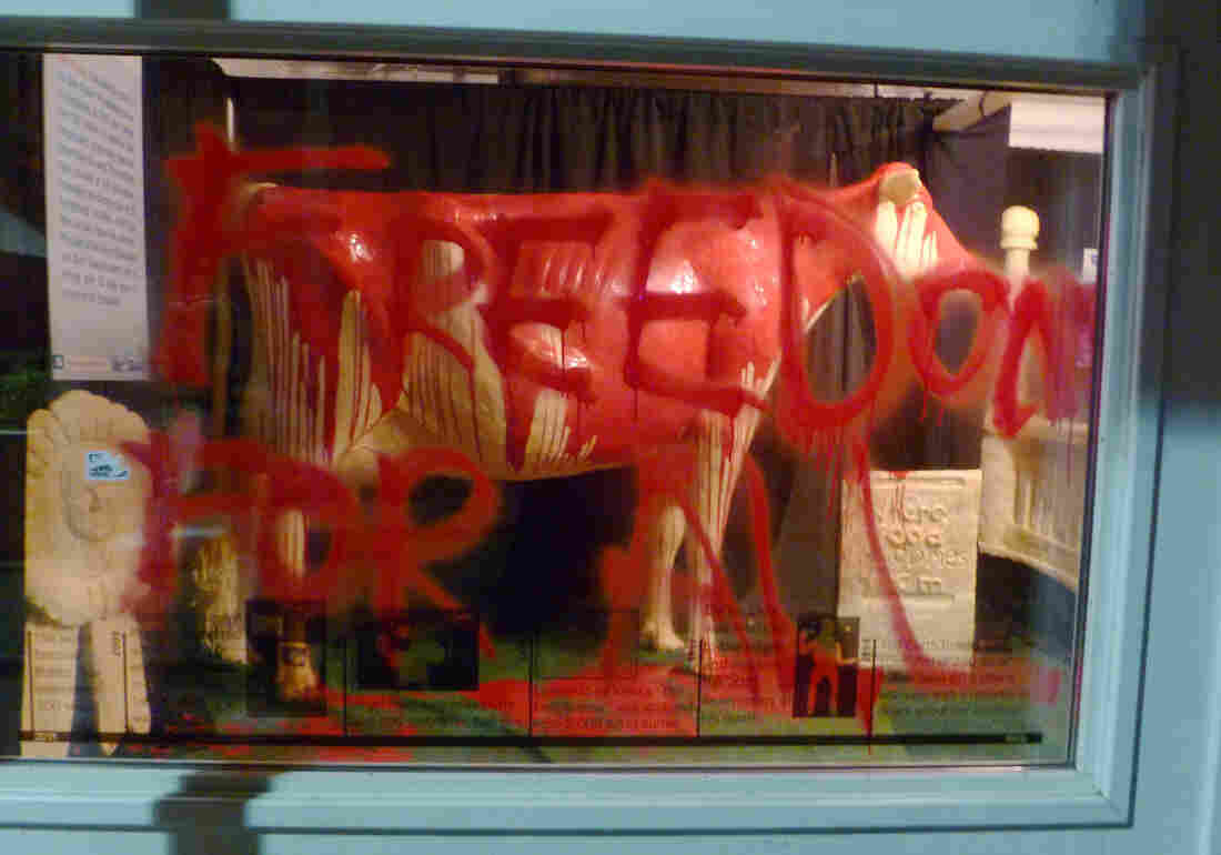 """This photo provided by Iowans for Animal Liberation shows the 2013 butter cow at the Iowa State Fair in Des Moines, Iowa. Authorities confirmed Monday that people had gained access to the display, poured red paint over the butter sculpture and scrawled, """"Freedom for all,"""" on a display window."""