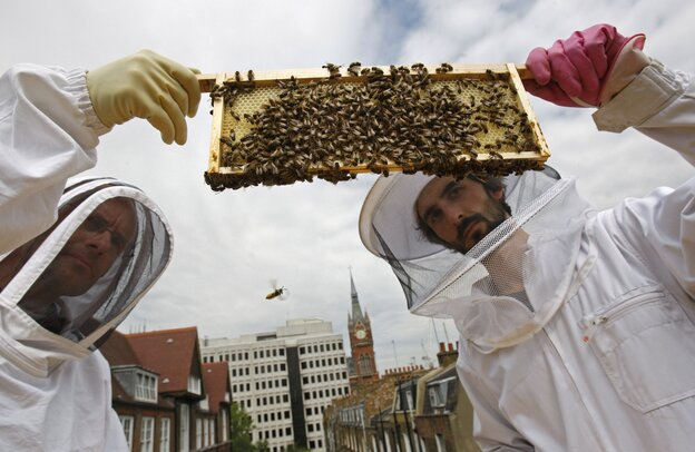 Beehive designer Johannes Paul (right) and Natur