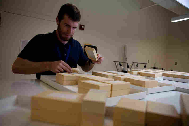 Kristofer Helgen made the discovery while he was studying another member of the raccoon family called olingo. Here Helgen, who is the curator of mammals at the Smithsonian Museum of Natural History in Washington, D.C., looks through boxes of bones.