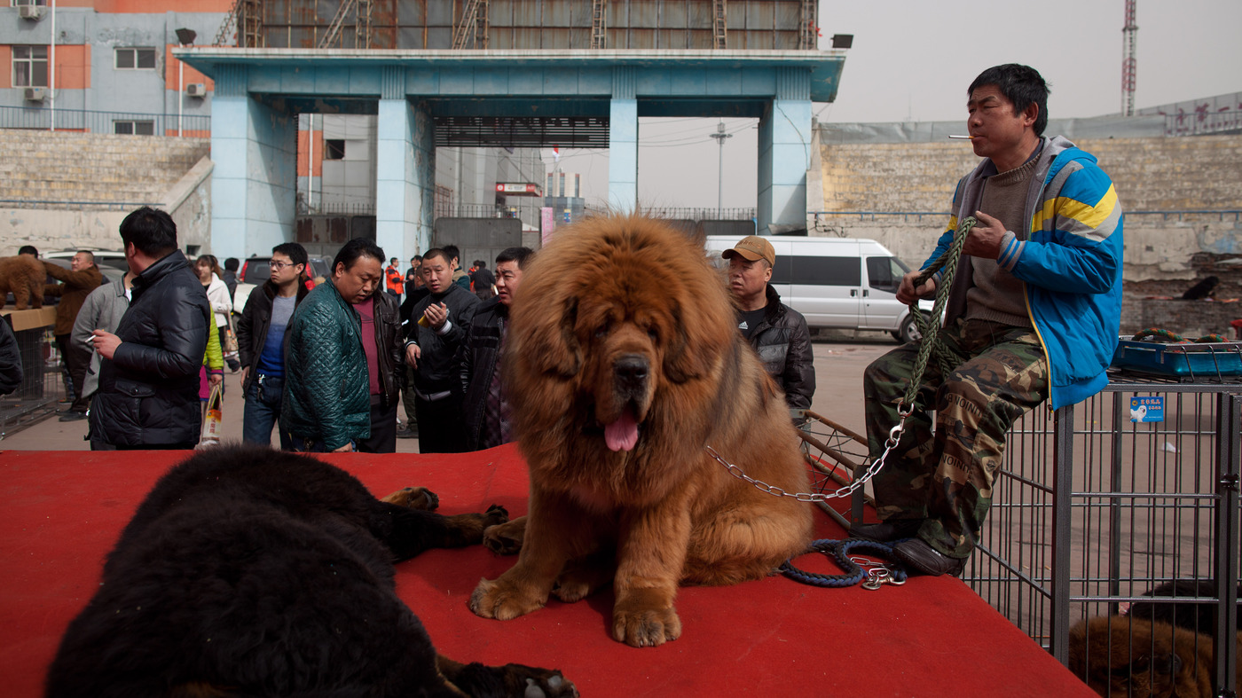 Zoo In China Swaps Dog For Lion, Hopes No One Notices