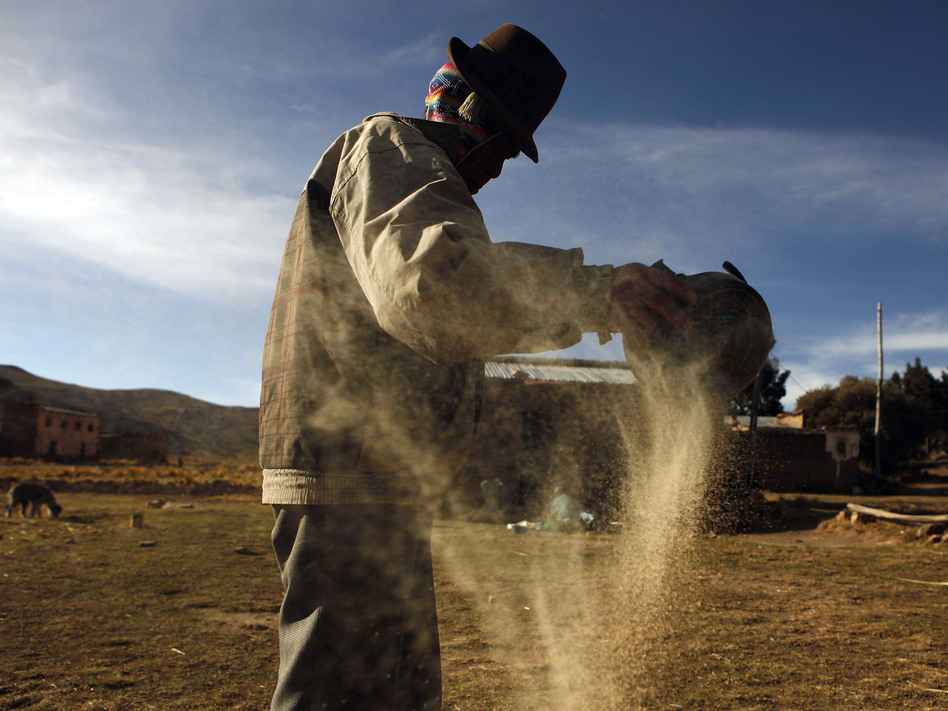 A man cleans quinoa grain in Pacoma, Bolivia.