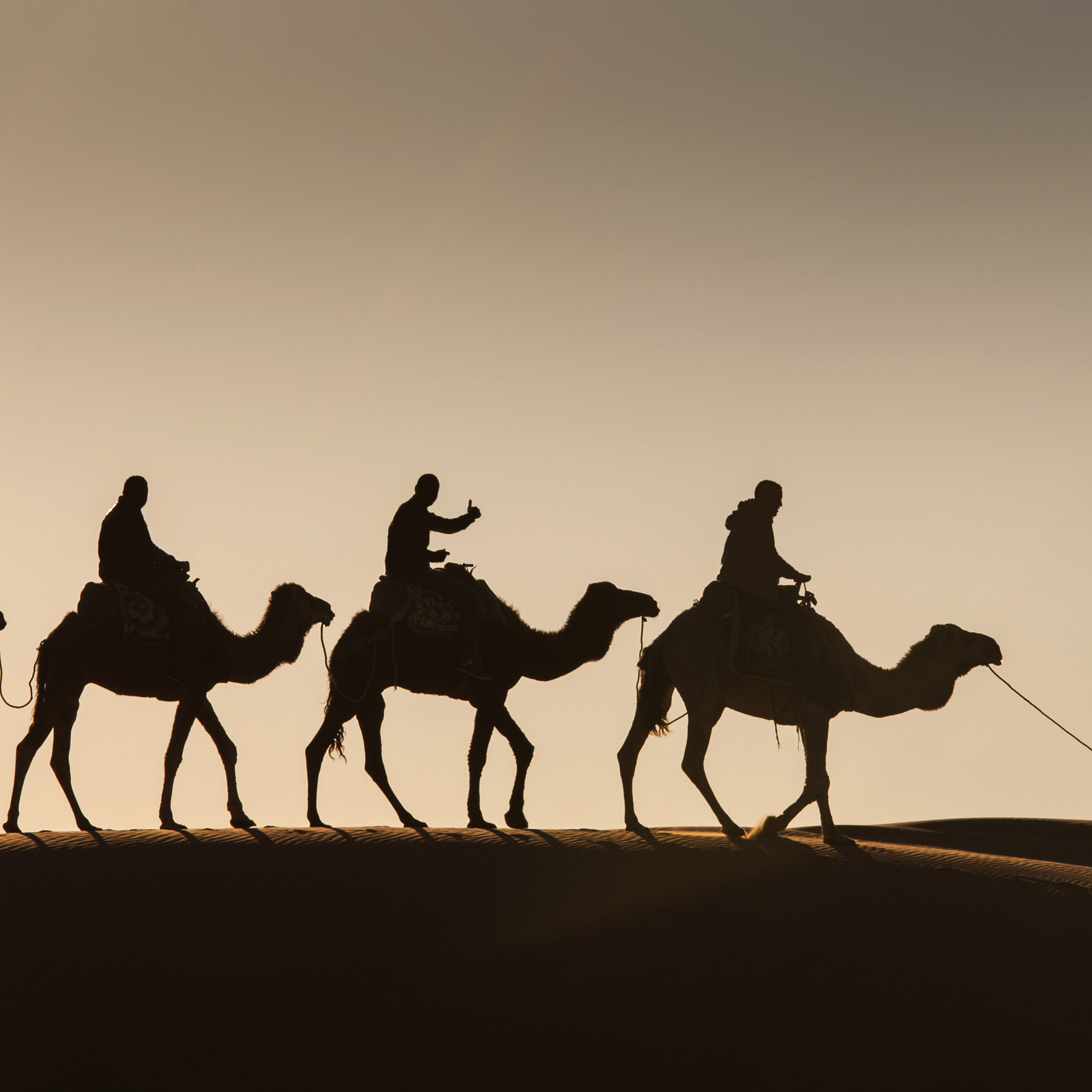 Four camels and riders