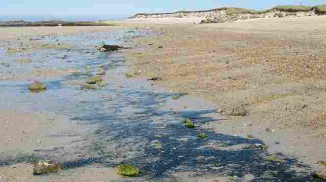 Convoluta on Herm Island