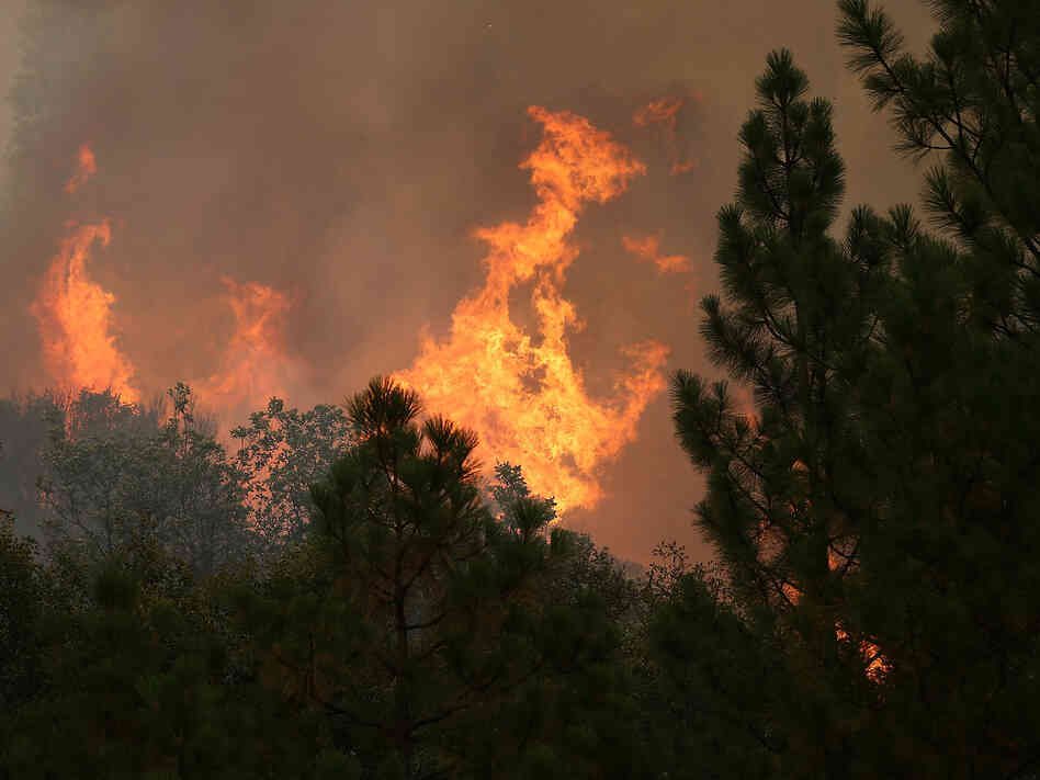 The Rim Fire consumes trees on Friday near Groveland, California.