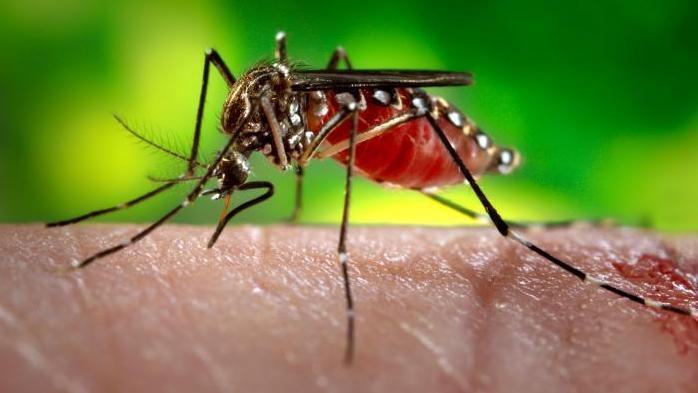 Dengue Fever Pops Up In Florida
