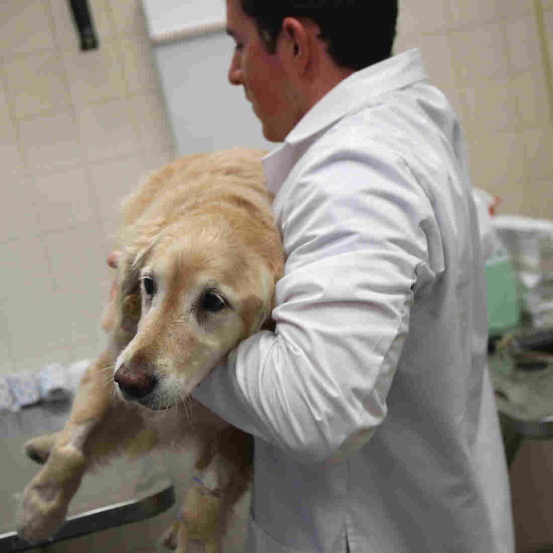 There's Not Enough Work For Veterinarians