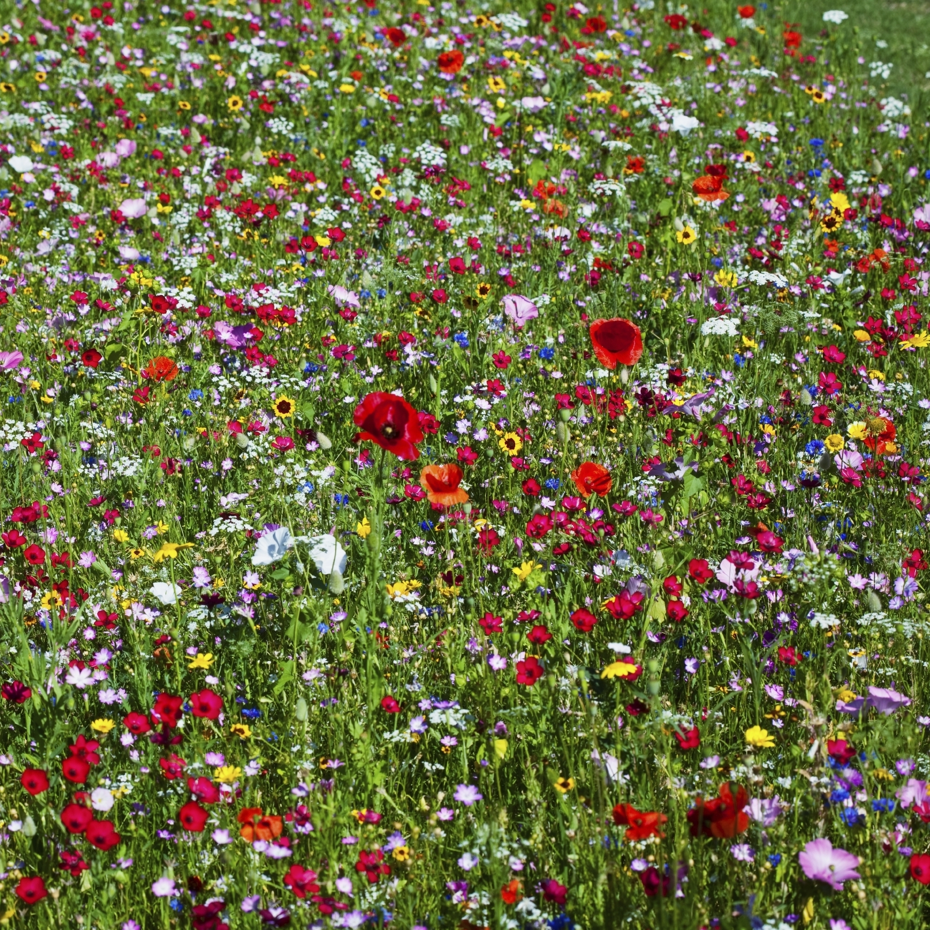 How's your internal garden? Diversity in wildflowers is pretty, but diversity in the so-called microflora living in your gut is even better.