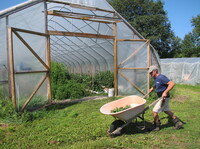 Joe Buley owns Screamin' Ridge Farm in Montpelier, Vt. He says the FDA's new food safety rules threaten the viability of small New England farm operations like his. Here, Buley harvests cucumbers.