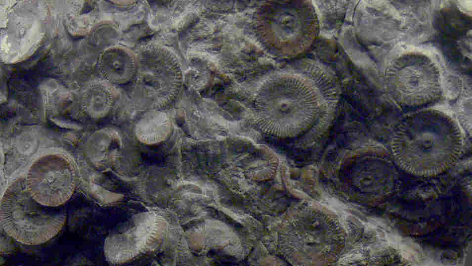 One hoaxer claimed these structures, discovered in ancient rock, were leftover gears from a prehistoric machine. They are actually the fossilized stems of crinoids.