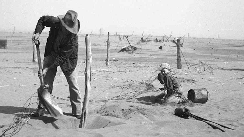 A Dust Bowl farmer digs out a fence post to keep it fr