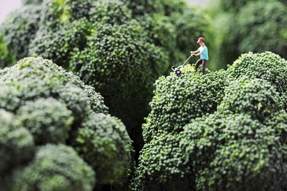 "Broccoli Mower: ""Douglas stubbornly refused to accept his wife's opinion that he had let the lawn go too long without attention."""