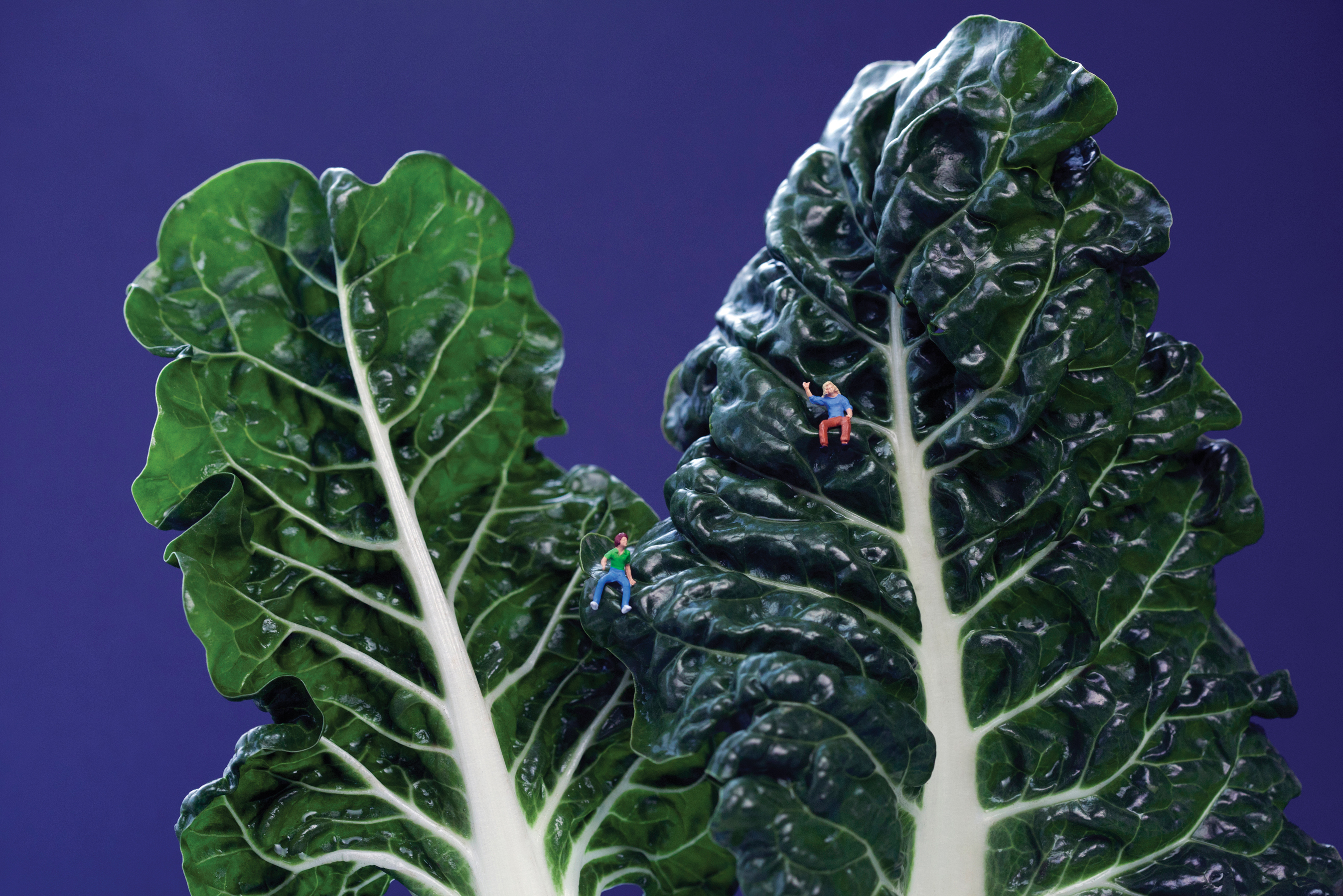 "Swiss Chard Couple: ""Grace and Kat bonded over their mutual love of high places."""