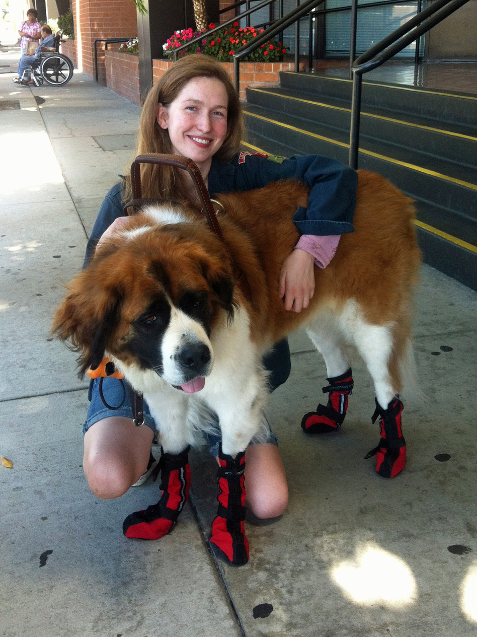 Lauren Henderson and her service dog, Phoebe, in Los Angeles. Henderson says she's seeing more dogs in vests that don't appear to be legitimate service dogs. (Lisa Napoli/KCRW)