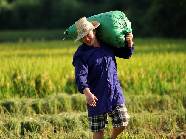 A farmer carries a bag of rice in China's Jiangxi province in July 2013.