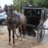 Jamesport has the largest Amish community in Missouri, and horse-pulled buggies are often parked alongside cars. Horse owners in the state are divided over whether to allow horses to be killed for meat in the U.S.