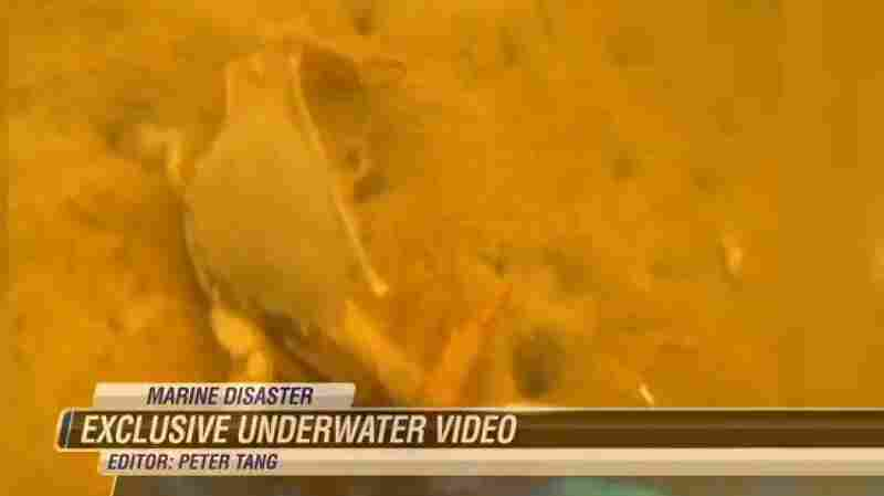 An image from video shot by diver Roger White for Hawaii News Now shows how the molasses spill has affected the water in part of Honolulu Harbor and killed many creatures.