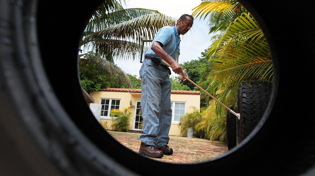 In 2010, Florida health officials looked for mosquito larvae in vehicle tires where water had collected. As many as 15 cases have been found in Stuart this year. (Getty Images)